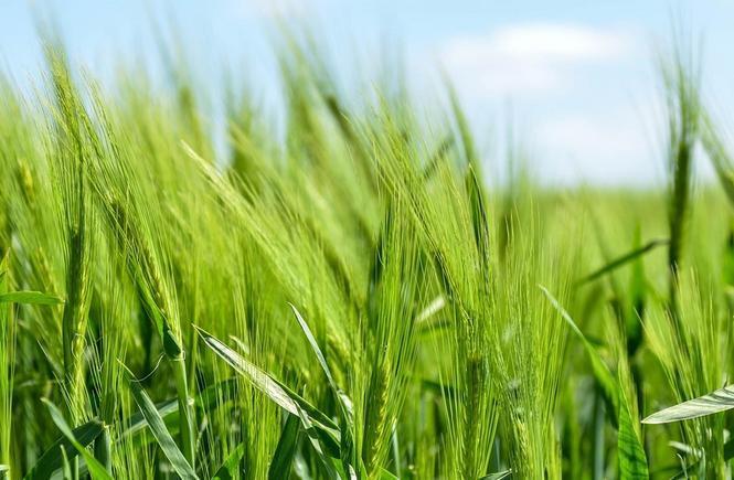 Food governance: nutrire la forza delle comunità