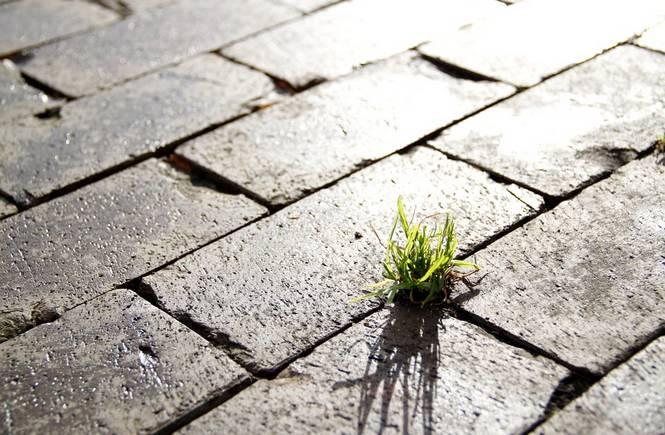 La bugia della crescita verde