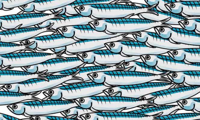 """Le sardine arrivano in città: nasce il gruppo """"Caltanissetta non si lega"""", subito adesioni"""