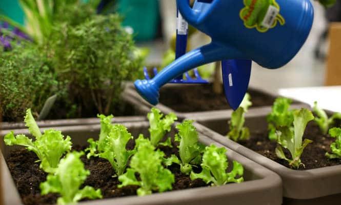 Fa' la cosa giusta! Torna la fiera del consumo critico e della sostenibilità
