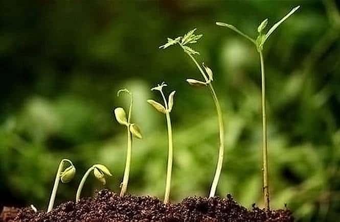 Oltre il mito della crescita verde e la crisi dell'immaginazione